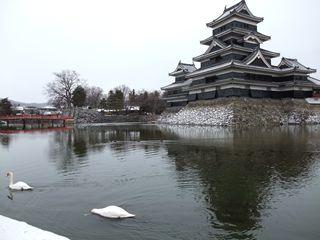 松本城と白鳥
